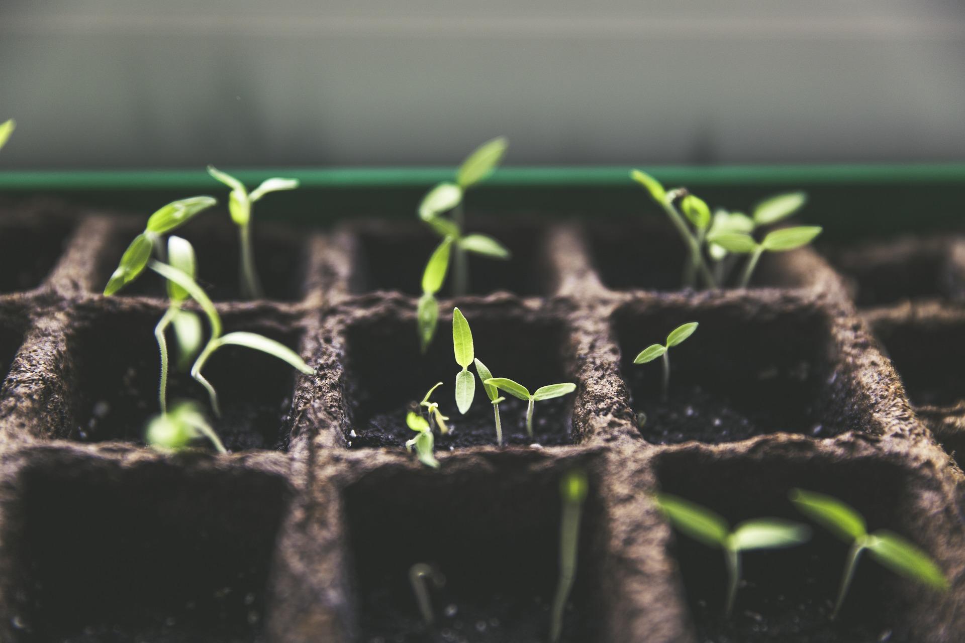 Pflanzenanbau / Pixabay