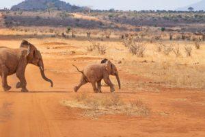 Nationalpark Afrika / Pixabay
