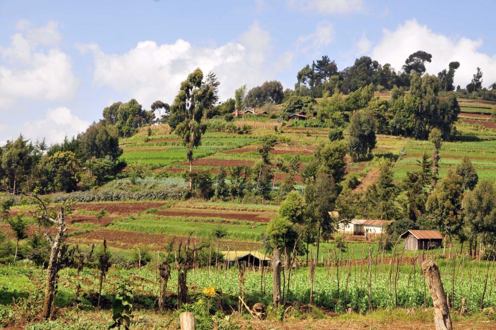 Beispiel einer integrierten Landwirtschaft. Der AgroForst ist eine ideale Kombination aus Landwirtschaft und Nutzbäumen.