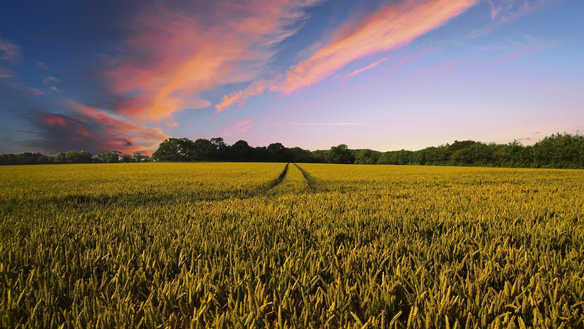 Landwirtschaft Forschen und Testen / Pixabay