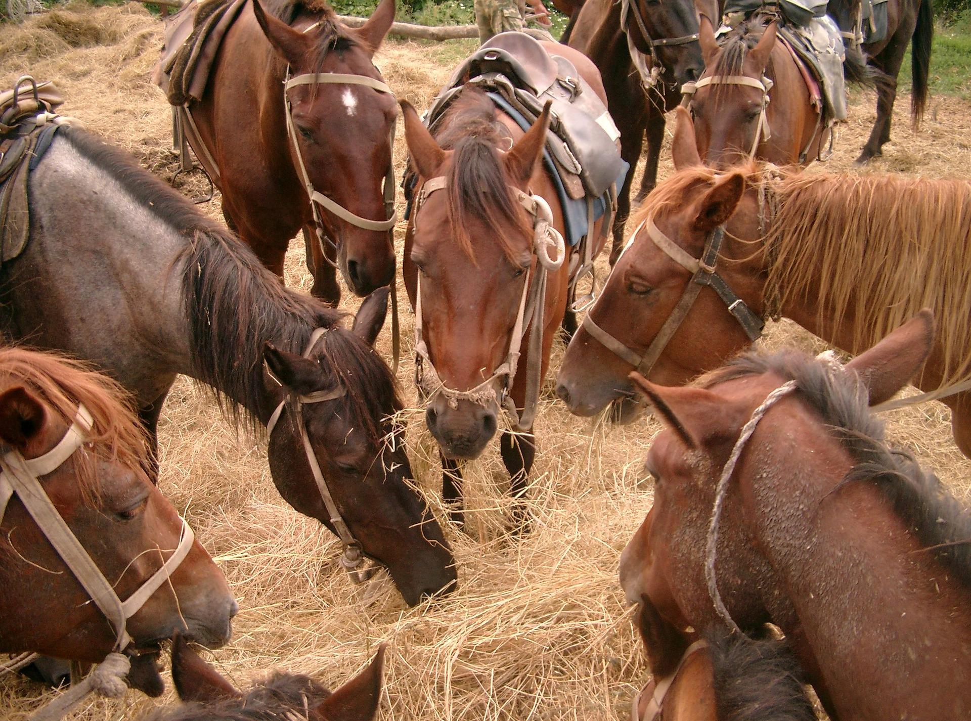 Pferde als Arbeitstier in der Landwirtschaft / Pixabay