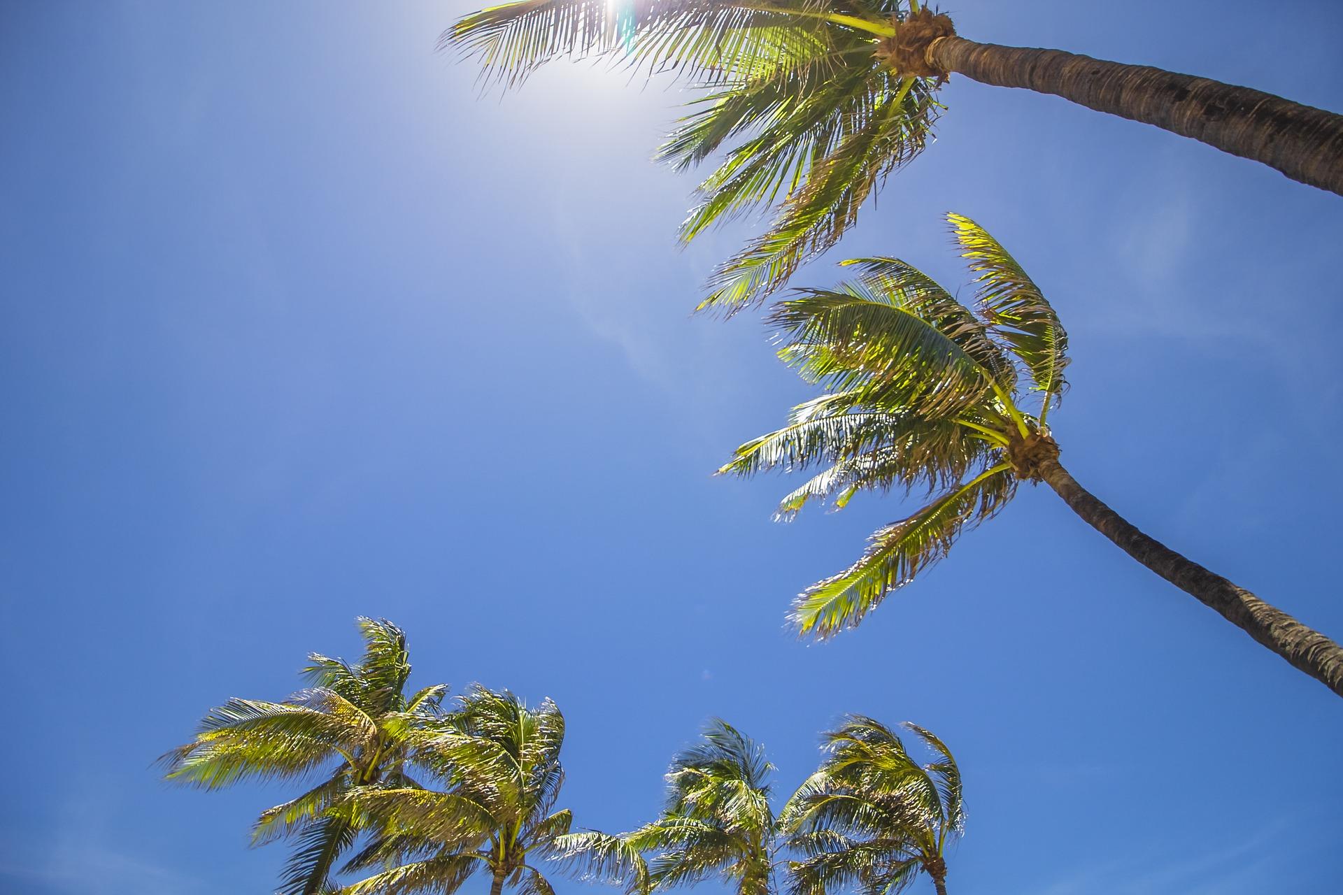 Florida USA: Mimado por el sol / Pixabay