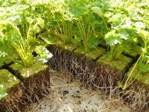 Landwirtschaft 4.0: Indoor-Vertical-Farming