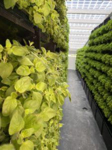 Landwirtschaft im Wandel: Foodtech - Indoor-Vertical-Farming