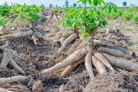 Naturschönheiten Afrikas - Trockenheit und Trinkwassermangel