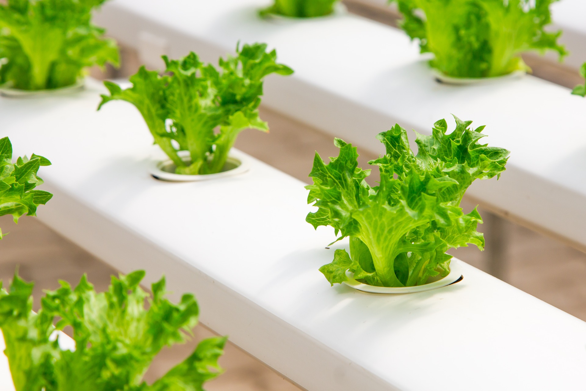 European Green Deal: Die Landwirtschaft in der Reform