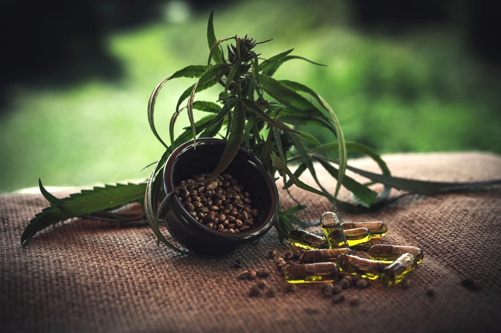 Nutzpflanzen im geschlossenen System anbauen